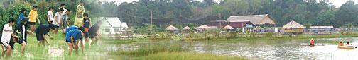 Kahang